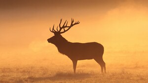 Deer Animals Mammals Stags Silhouette Grass Field Orange Elk Morning 2560x1707 Wallpaper