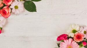 Carnation Chrysanthemum Daisy Gerbera Rose 3935x2623 Wallpaper