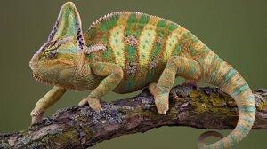 Animal Chameleon 3736x2468 Wallpaper