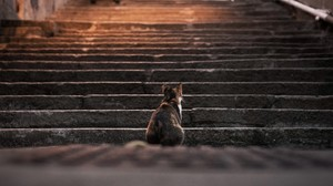 Cats Animals Stairs Depth Of Field Steps 2560x1440 Wallpaper
