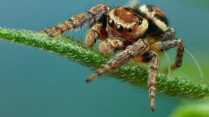 Arachnid Macro Spider 2048x1365 Wallpaper