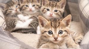 Animals Kittens Cats Mammals Feline 1920x1315 Wallpaper