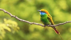 Bird Green Bee Eater Wildlife 2048x1359 Wallpaper