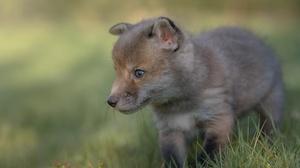 Baby Animal Wildlife Cub 2000x1331 Wallpaper