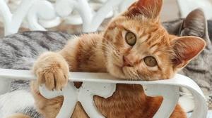 Cats Animals Mammals 2048x1537 Wallpaper