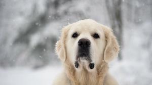 Animal Blur Close Up Dog Snow 1920x1200 wallpaper