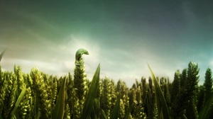 Chameleon Grass Green Lizard 2560x1600 Wallpaper
