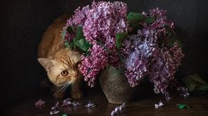 Pet Flower Purple Flower 1920x1280 Wallpaper