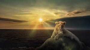 Sunset Stone Cub Wildlife 2419x1360 Wallpaper
