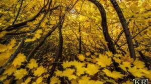 Leaf Fall Branch Foliage 2000x1334 Wallpaper