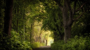 Netherlands Nature Trees Plants Outdoors Road 2048x1365 Wallpaper