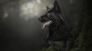 Dog Pet 2560x1709 wallpaper