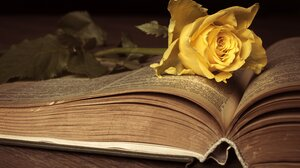 Book Flower 6016x3882 wallpaper