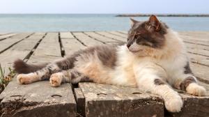 Cat Pet 2560x1440 Wallpaper