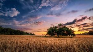 Nature Summer Field Sunset Sky 2048x1253 Wallpaper