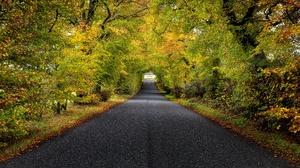 Tree Tunnel 3840x2160 wallpaper