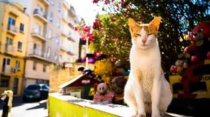 Cat Depth Of Field Pet Sunny 2048x1365 Wallpaper