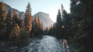 Forest River Sunrise 1920x1280 Wallpaper