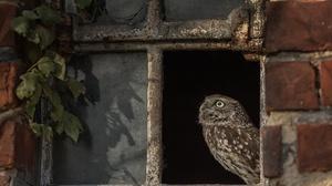 Bird Owl Wildlife 2048x1300 Wallpaper