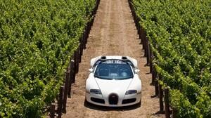 Bugatti Italian Vineyard 1920x1200 Wallpaper
