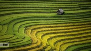 Landscape Rice Paddy Cabin Asia 2048x1152 Wallpaper