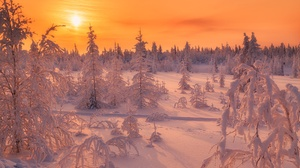 Forest Frost Sky Snow Sun Sunset Winter 2000x1333 Wallpaper