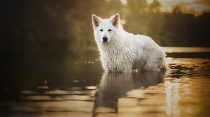 Depth Of Field Dog Pet Reflection Stare Water 2048x1313 Wallpaper