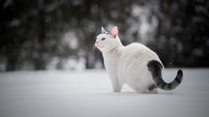 Cat Pet Winter 2048x1367 wallpaper