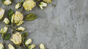 Rose 4928x3264 wallpaper