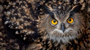 Bird Owl Wildlife 3300x2200 Wallpaper