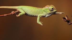 Lizard 1920x1080 Wallpaper