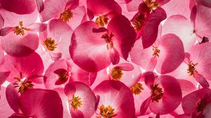 Earth Flower 2048x1374 Wallpaper