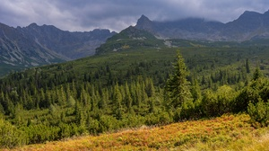 Forest Mountain Peak Spruce 3840x2160 Wallpaper