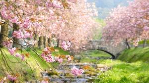 Bridge Cherry Blossom Depth Of Field Earth Pink Flower Spring 3840x2160 Wallpaper