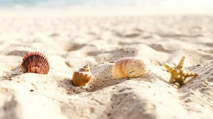 Sand Shell 6240x4160 Wallpaper