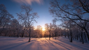 Winter Outdoors Nature Cold Ice Snow Trees Sunlight 3840x2160 Wallpaper