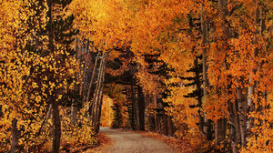 Dirt Road Fall Foliage Forest Road Orange Color 1920x1280 Wallpaper