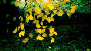 Branch Earth Fall Foliage Leaf Oak Yellow 2880x1592 Wallpaper