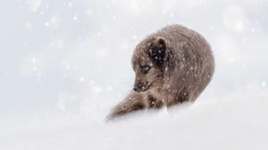 Fox Snow Snowfall Wildlife Winter 2560x1440 Wallpaper