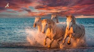 Horse 1920x1080 Wallpaper