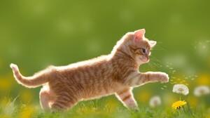 Animal Baby Animal Cat Dandelion Kitten 3840x2560 Wallpaper