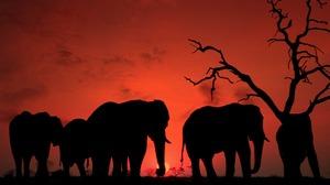 Elephant Silhouette Sunset 1920x1280 Wallpaper