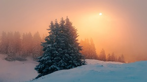 Fog Sunset Winter 3072x1728 Wallpaper