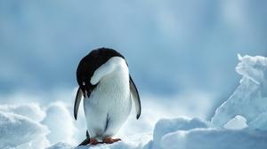 Penguin Wildlife 2200x1467 Wallpaper