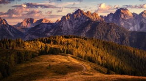 Alps Fir Tree Forest Mountain 1920x1280 Wallpaper