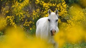 Animal Horse 4288x2848 Wallpaper