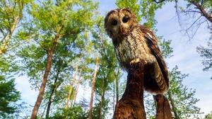 Bird Owl Stump 2400x1600 Wallpaper