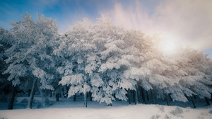 Trees Cold Ice Snow Winter Outdoors Plants Nature 3840x2160 Wallpaper