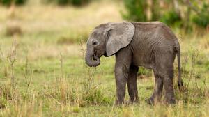 Baby Animal Elephant Wildlife 4800x3200 Wallpaper