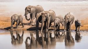 Elephant Wildlife 2000x1333 Wallpaper